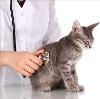 Ветеринарные клиники в Большой Мурте